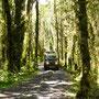 Fahrt durch den Regenwald des Parque Pumalin