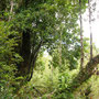 Im Parque Pumalin