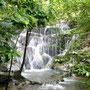 Regenwald rund um die Ruinen von Palenque