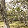 Feuerländischer Wald