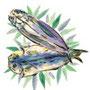 魚のイラスト くさやの干物 墨彩画(絵手紙・昔話風タッチ)