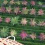 Über herbstlich gefärbte Obstgärten ...