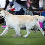 Dog Show Projekt Münsingen 2019