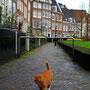 Garfield lebt in Amsterdam!!!!