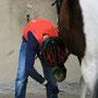 Hufe auskratzen - Safety first mit Helm ;-)