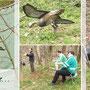 7. Heide-Waldpokal 3D Turnier am 05.04.2014 in Merkwitz - Das zweite bewegte Ziel, die fliegende Gans.