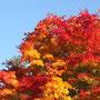 カップルがかならず写真撮影する紅葉。見事でした!