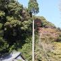 すっくと伸びた杉の木も美しい!