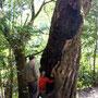 周辺は自然の宝庫。しらかし老大樹の命の力に感動!!