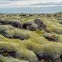 Mooslandschaft - Island