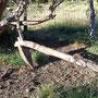 Arado de madera