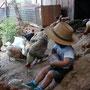 Niño alimenando pollos