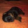 Yuma ganz müde