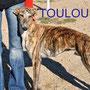 TOULOUSE adopté par Christine (Belgique