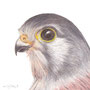 "Helen Clifford - ""Kestrel Head"" - £55"