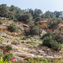 Avakas Gorge, Cyprus, 15.05.2012, EOS-1D Mark IV, EF 24-105 f/4L IS  USM, Av, Spot, B=45mm, 1/125 Sek. bei f/8,0, ISO 100