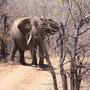 Achtung - Elefant im Anmarsch