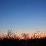 Savanne im Abendlicht mit Mond