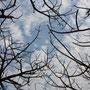 der Himmel Afrikas durch das Kronendach eines Baobab