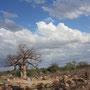 Baobab und unendliche Weite