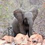 Baby-Elefant - Hallo :-)