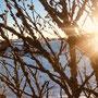 Winterlandschaft Ammeldingen im Januar 2021 (Foto: Christine Norta)