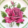 Lund & Clausen rose Mother's Day