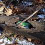 Mein erster Geocache 2015. Formschön im Baumstamm versteckt.
