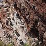 Basstölpel und Trottellummen kommen nur zum Brüten an die Felsen von Helgoland.