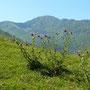 Ariège-Pyrénées, Goulier, Pique d'Endron