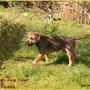 Freddie inspeziert den Garten