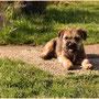 Freddie beim Sonnenbad