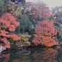 城址公園のお堀の紅葉。京都に行かなくても大丈夫です。