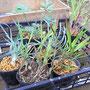 主役になる植物たち(←ちなみにこちらは居残り組)。