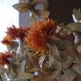おまけ。少し前に買って来て作った紅花のドライフラワー。若いとんがった男子みたい。