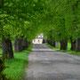 Herrenhaus Viol - Vihula, Estland (2016), Allee zum Herrenhaus