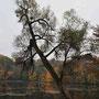 Der kleine See von Friedrichstein - Kamenka, Ostpreussen, Russland, Kaliningrad (2013) 1