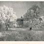 Wildenhoff - Dzikowo Ilawecki, ostpreussen - Polen (um 1941) Parkseite