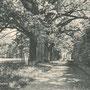 Steinort - Stynort, Ostpreussen - Polen (um 1938), Allee im Park