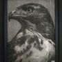 Faucon#1 122 x 95 cm