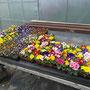 Unser Frühjahrsblüher-Angebot