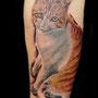 タトゥー 猫 ポートレート 腕 カラー
