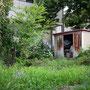 ジャングルに古い物置