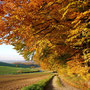 Herbstlicher Buchenwald