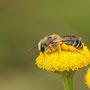 Bienchen macht Pause