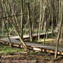 Der Steg schlängelt sich durch den Wald