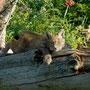 Wer beobachtet hier wen?, Wildpark Neuhaus