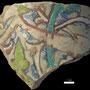 Echantillon BDX 11848. Fouilles de l'Ak Saray de 1996.  Conservé au Musée Amir Temur de Shahrisabz (photo : C.Ollagnier, 2008)