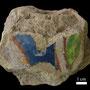 Echantillon BDX 11850. Fouilles de l'Ak Saray de 1996.  Conservé au Musée Amir Temur de Shahrisabz (photo : C.Ollagnier, 2008)