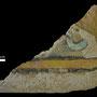 Echantillon BDX 1154. Fouilles de l'Ak Saray de 1996.  Conservé au Musée Amir Temur de Shahrisabz (photo : C.Ollagnier, 2008)
